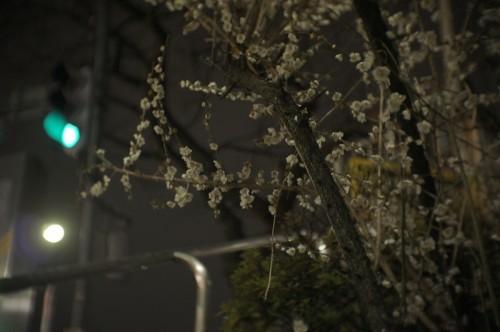Fujian 35mm f1.7&SONY NEX5